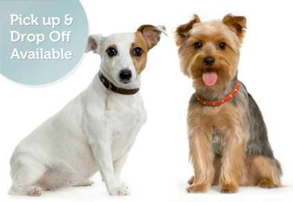 Dog Grooming, pick up, drop off service available