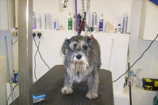 Dog Grooming Limerick City